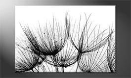 Décor moderne<br>'Detail Of Dandelion'