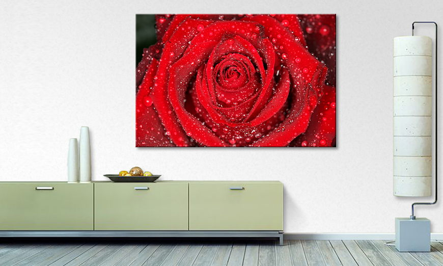 Le tableau mural Morning �Rose