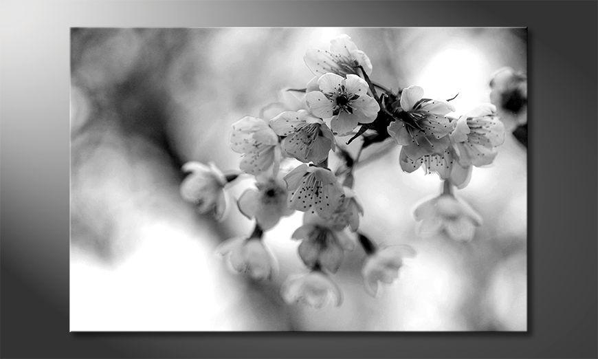 Les tableau imprimés Cherry Blossoms