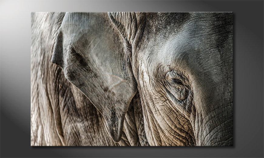 L'impression sur toile Eye of Elephant