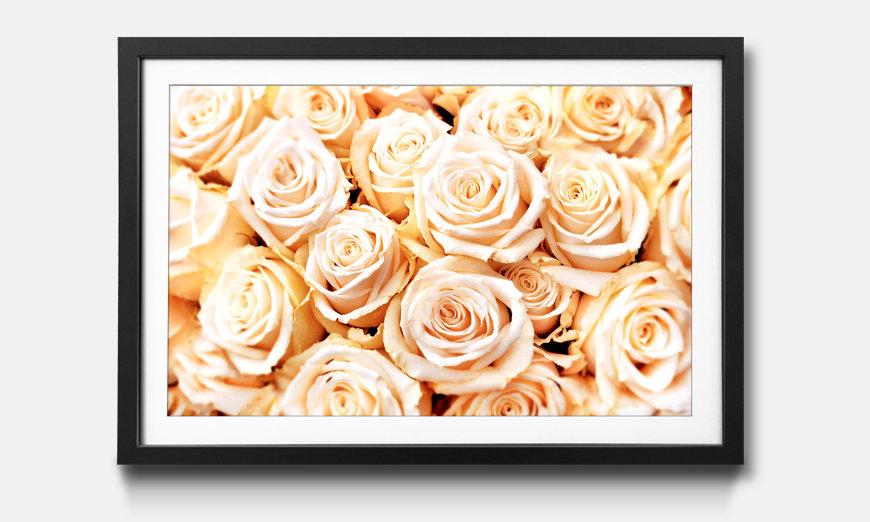 La reproduction encadrée Creamy Roses