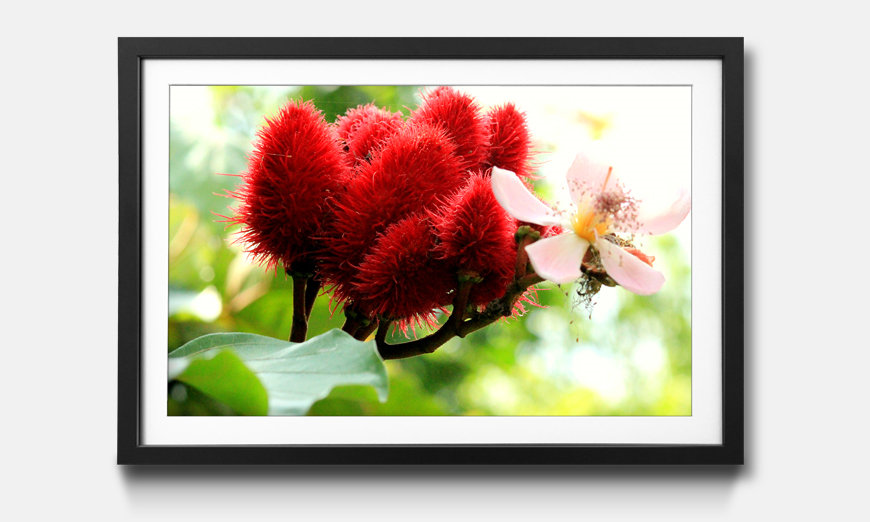 Le tableau encadré Beauty Redbud