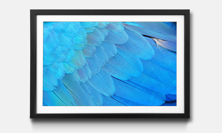 Le tableau encadré Bird Feathers