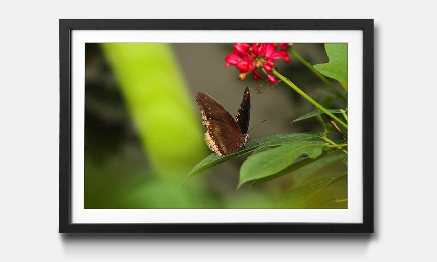 Le tableau encadré Brown Butterfly