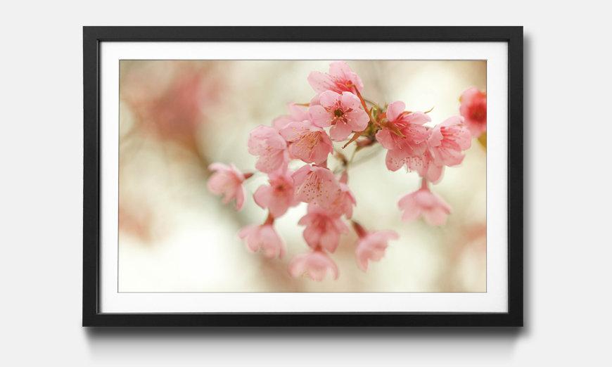 Le tableau encadré Cherry Blossoms