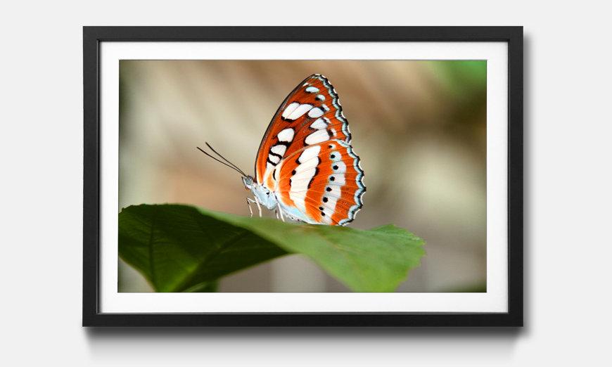 Le tableau encadré Orange Butterfly