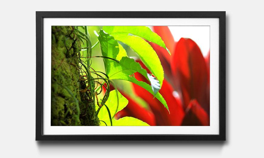 Le tableau encadré Red Green Nature