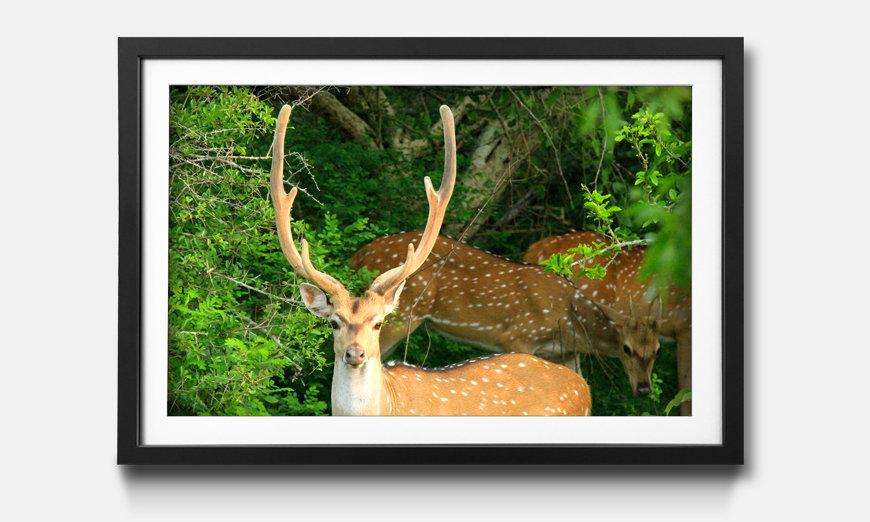 Le tableau encadré Watching Deer