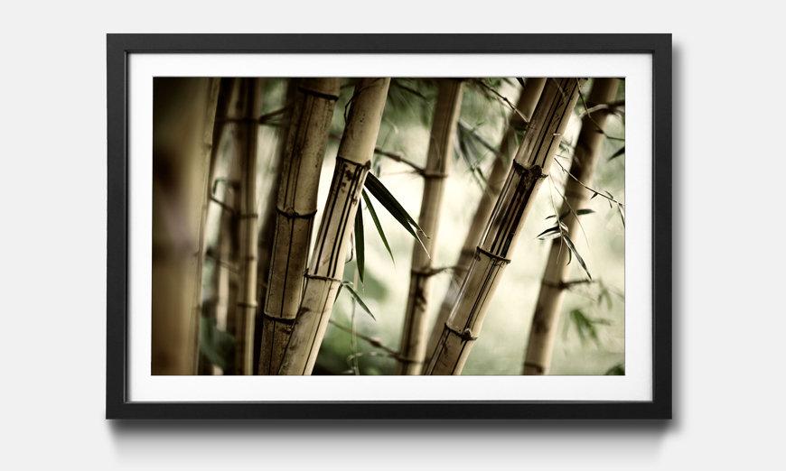 L'impression encadrée Bamboo Forest