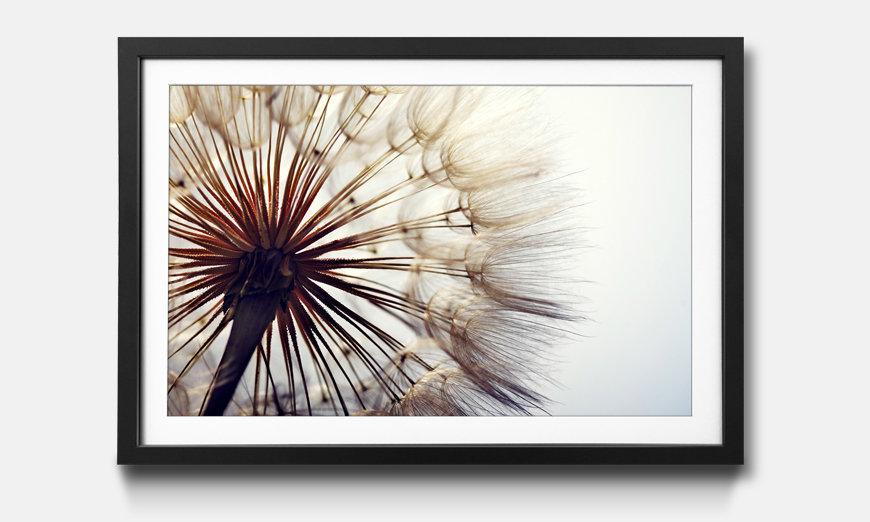 Reproduction encadrée: Big Dandelion