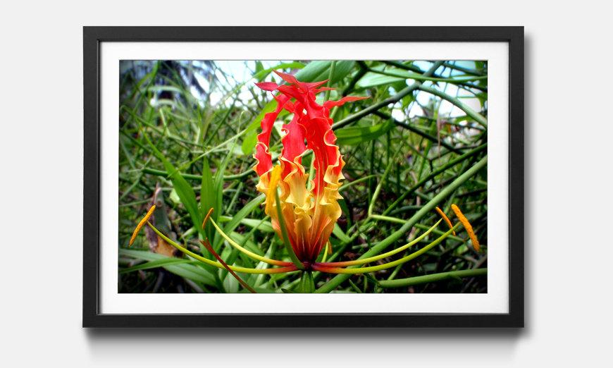 Reproduction encadrée: Flower Queen