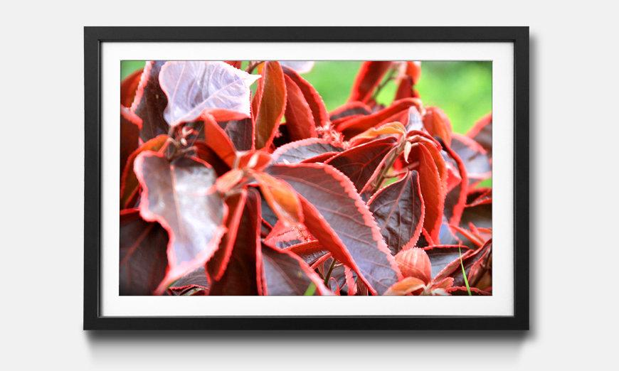 Tableau encadrée: Beauty Plant
