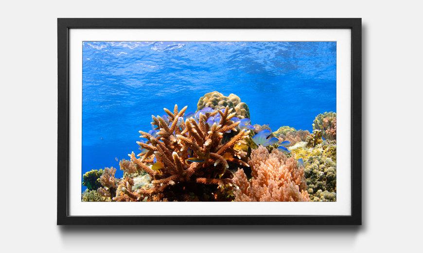 Tableau encadrée: Corals Reef