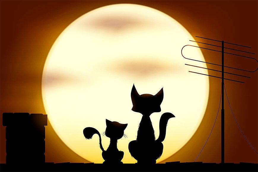 Intissé déco Romantic Cats