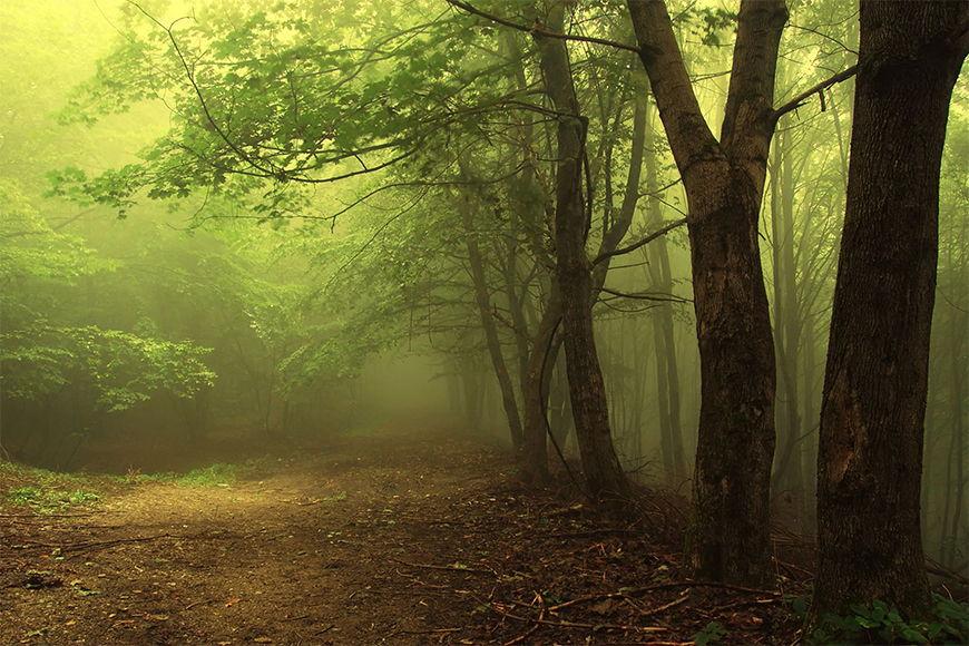 Papier peint photo La forêt des contes 120x80cm et plus